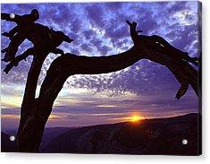 Jeffrey Pine Sentinel Dome Acrylic Print by Alan Lenk