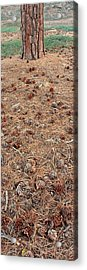 Jeffrey Pine Trunk And Pine Cones Acrylic Print by Panoramic Images