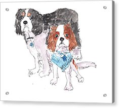 Jeffs Dogs Watercolor Kmcelwaine  Acrylic Print