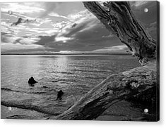Jekyll Driftwood At Sunset In Black And White Acrylic Print