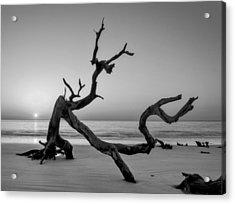 Jekyll Island Driftwood In Black And White Acrylic Print