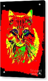 Jekyll The Cat Acrylic Print