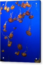 Jelly Fish 1 Acrylic Print by Dawn Marie Black