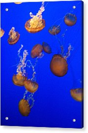 Jelly Fish 2 Acrylic Print by Dawn Marie Black