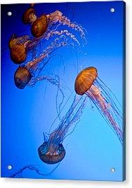 Jelly Fish Iv Acrylic Print by James Dricker