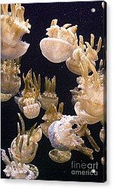 Jelly Parade Acrylic Print