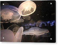 Jellyfish Acrylic Print by Cory Bykoski