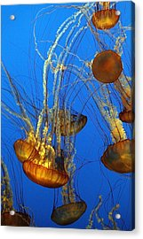 Jellyfish Family Acrylic Print