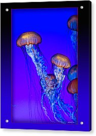 Jellyfish Floating Up Acrylic Print