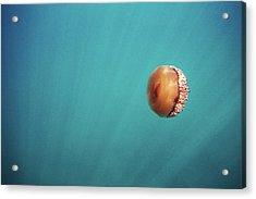 Jellyfish Acrylic Print
