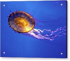 Jellyfish I Acrylic Print