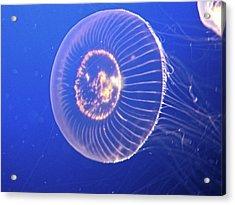 Jellyfish Iv Acrylic Print