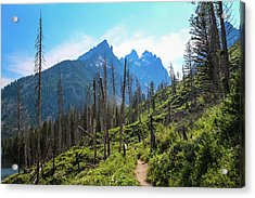 Jenny Lake Trail Acrylic Print