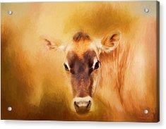 Jersey Cow Farm Art Acrylic Print by Michelle Wrighton