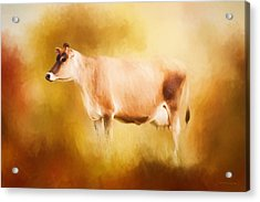 Jersey Cow In Field Acrylic Print by Michelle Wrighton