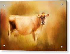 Jersey Cow  Acrylic Print by Michelle Wrighton