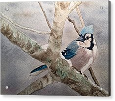 Cold Winter's Jay Acrylic Print