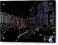 Jesse's In The Barn Acrylic Print