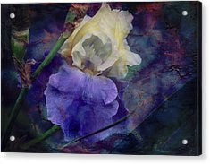 Acrylic Print featuring the photograph Jeweled Iris by Toni Hopper