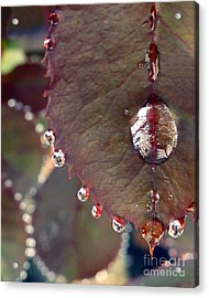 Jeweled Leaves Acrylic Print by Patricia Strand
