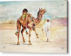 Jewellery And Trappings On Camel. Acrylic Print