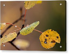 Jewels Of Autumn Acrylic Print by Jim Garrison