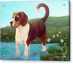 Jibbs Acrylic Print by Susan Clausen