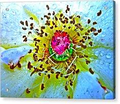 Jive Acrylic Print by Gwyn Newcombe