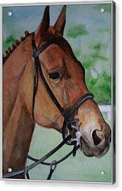 Joe's Horse Acrylic Print by Tabitha Marshall