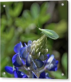 Jolly Green Giant Acrylic Print