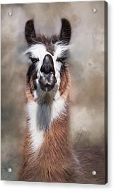 Acrylic Print featuring the photograph Jolly Llama by Robin-Lee Vieira