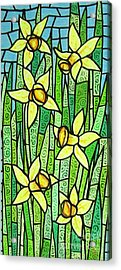 Jonquil Glory Acrylic Print by Jim Harris
