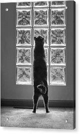 Joseph At The Window Acrylic Print