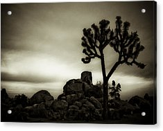 Acrylic Print featuring the photograph Joshua Morning by Tom Vaughan