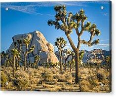 Joshua Tree And Intersection Rock Acrylic Print