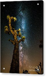 Joshua Tree And Milky Way Acrylic Print