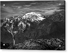 Acrylic Print featuring the photograph Joshua Tree At Keys View In Black And White by Randall Nyhof