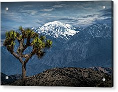 Acrylic Print featuring the photograph Joshua Tree At Keys View In Joshua Park National Park by Randall Nyhof