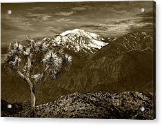 Acrylic Print featuring the photograph Joshua Tree At Keys View In Sepia Tone by Randall Nyhof