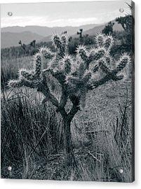 Joshua Tree Cactus Acrylic Print