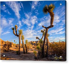 Joshua Tree Dawn Acrylic Print