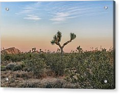Joshua Tree Evening Acrylic Print