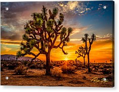 Joshua Tree Glow Acrylic Print
