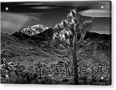 Acrylic Print featuring the photograph Joshua Tree In Black And White In Joshua Park National Park With The Little San Bernardino Mountains by Randall Nyhof
