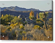 Joshua Tree National Park In California Acrylic Print by Christine Till
