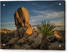 Joshua Tree Rock Formation Acrylic Print