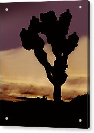 Joshua Tree Silo At Sunset Acrylic Print by Curtis J Neeley Jr