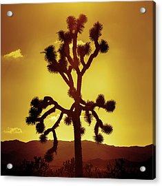 Acrylic Print featuring the photograph Joshua Tree by Stephen Stookey
