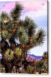 Joshua Tree Sunset Acrylic Print