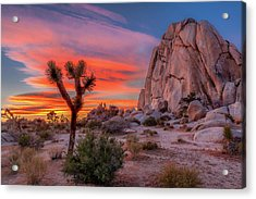 Joshua Tree Sunset Acrylic Print by Peter Tellone